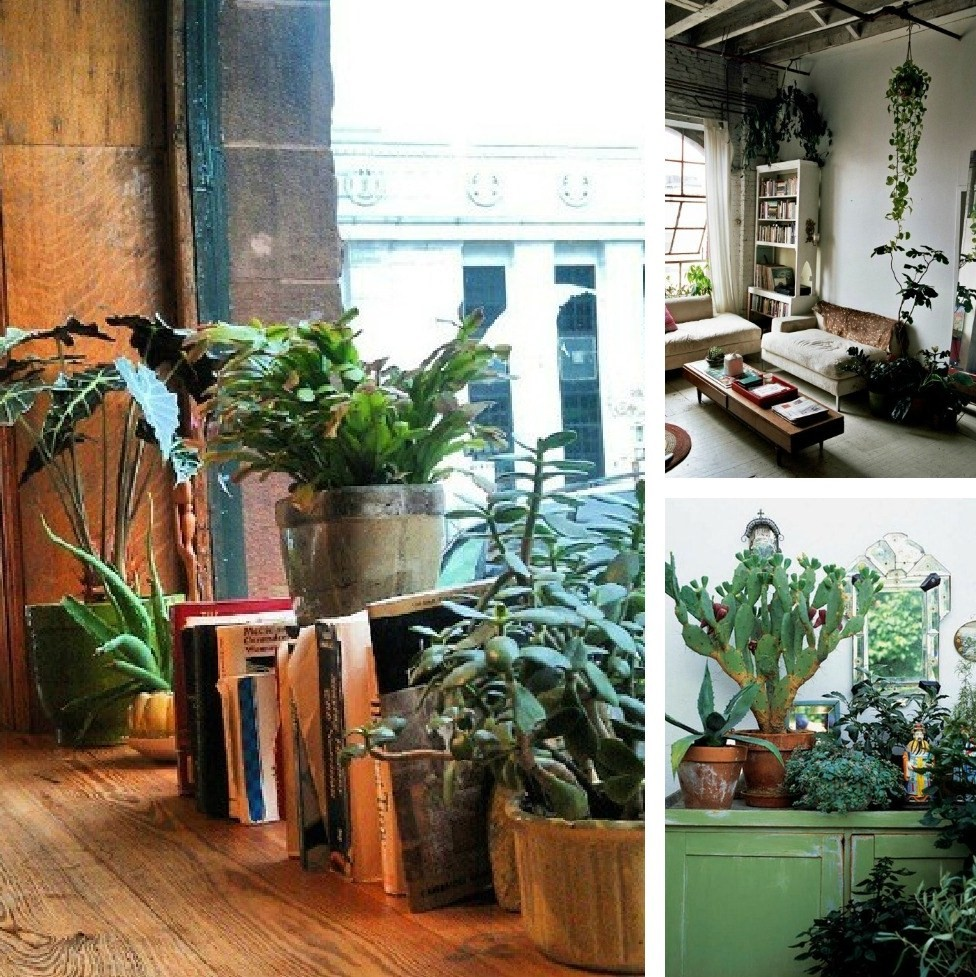 Green Home Design Ideas: Decorating Dilemma: House Plants