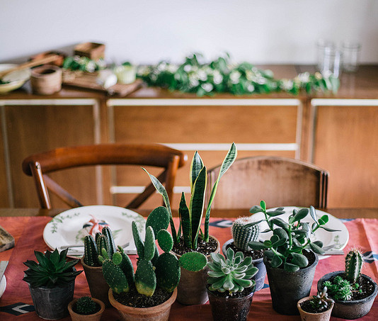 table-decorated-with-cacti-local-milk-blog2