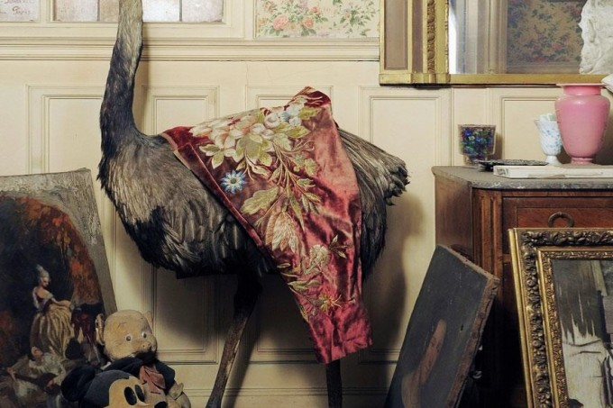 taxidermy in Paris apartment of Madame de Florian