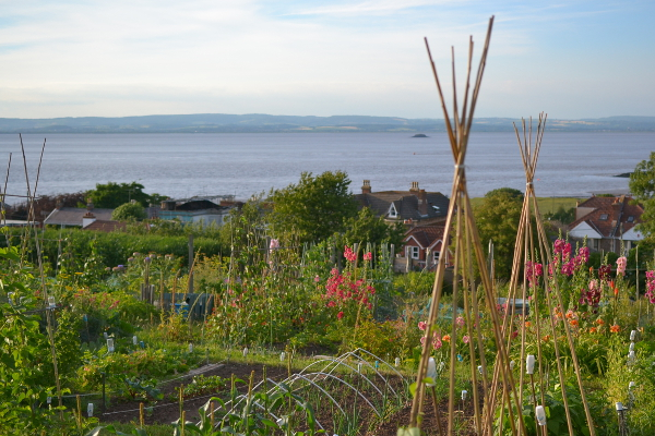 Allotments in Portishead overlooking Bristol Channel
