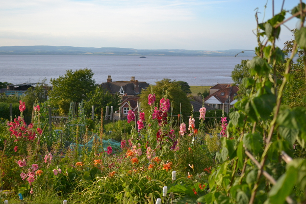 Allotments on Beach Hill Portishead overlooking the Bristol Channel