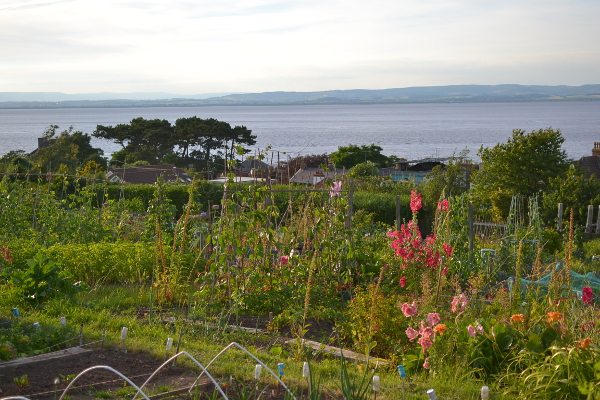 Beach Hill allotments Portishead Somerset