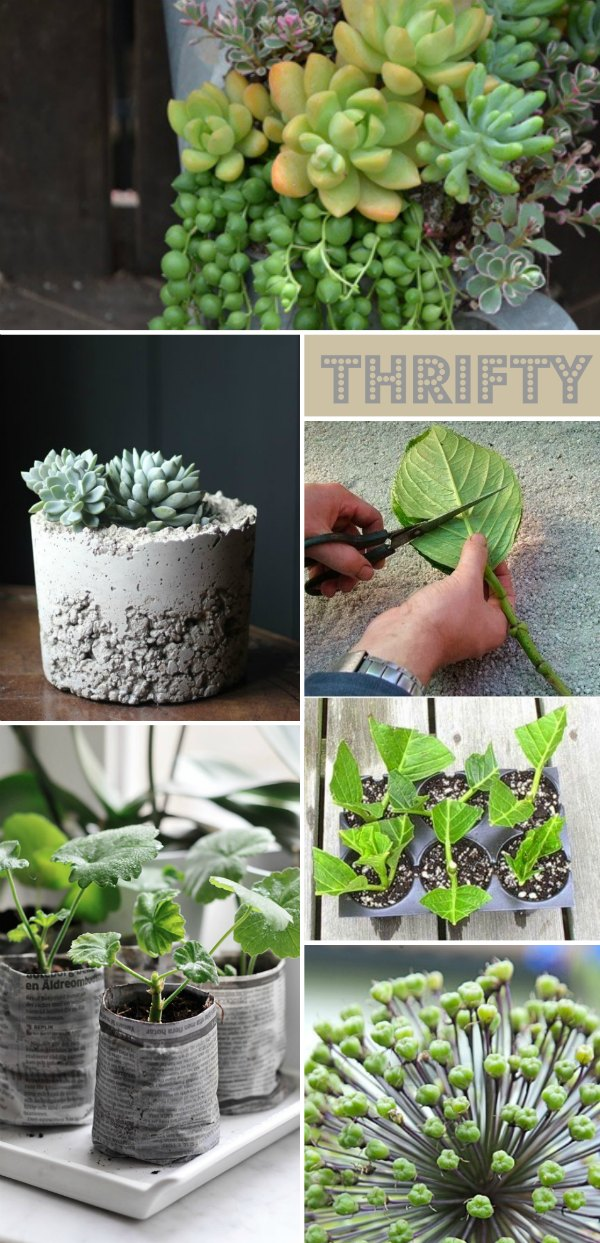 Thrifty gardening tips moodboard
