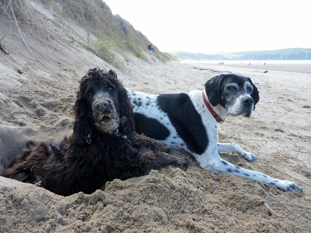 Kimba the hearing dog and lottie on the beach