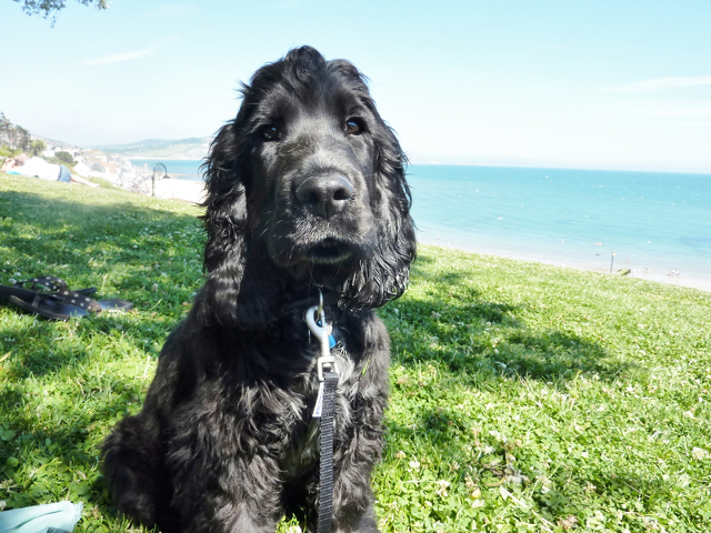 Kimba the hearing dog cliffs