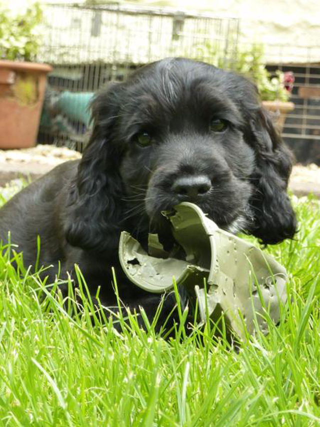 Kimba the hearing dog flower pot