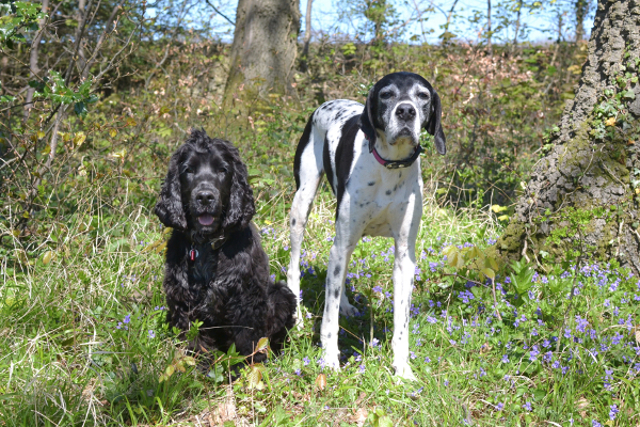 Kimba the hearing dog with Lottie