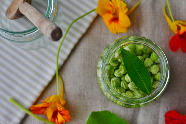 Pickled nasturtium seeds recipe Poor Mans Capers Decorator's Notebook blog 14
