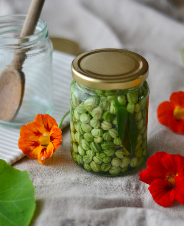 Pickled nasturtium seeds recipe poor mans capers Decorator's Notebook blog 9