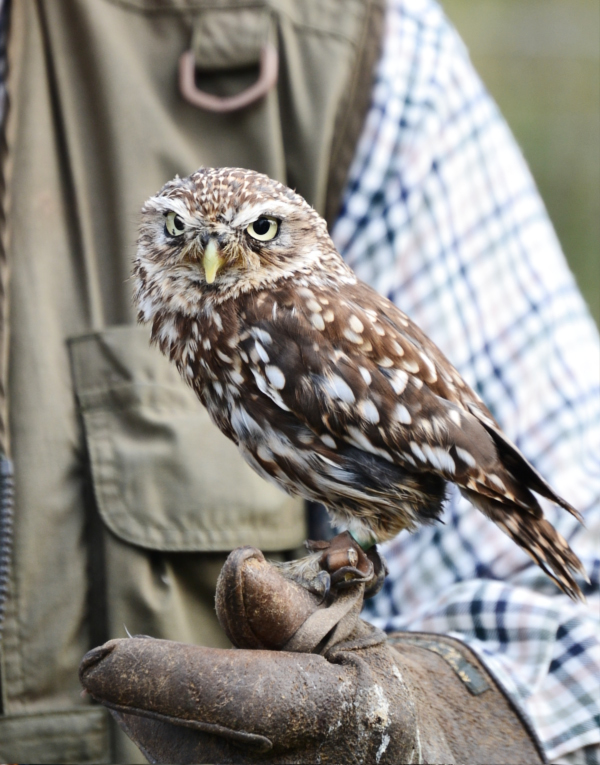 Good Life Experience festival little owl