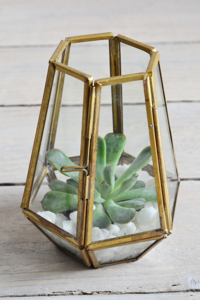 Brass_succelent_terrarium_fair_trade_Decorator_s_Notebook