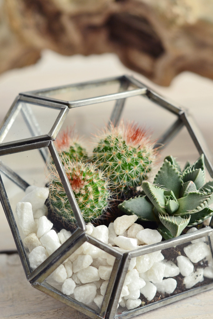 cacti terrarium Decorator's Notebook shop