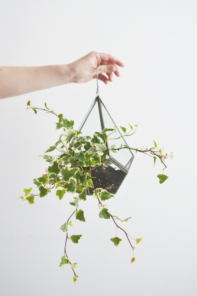hanging terrarium Decorator's Notebok Shop