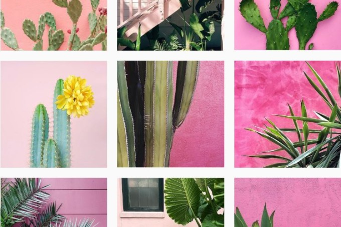 Plants on Pink